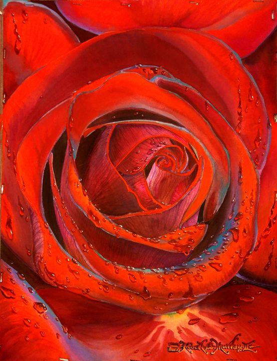 Dripping Wet Red Velvet Rose - Robert C. Murray II
