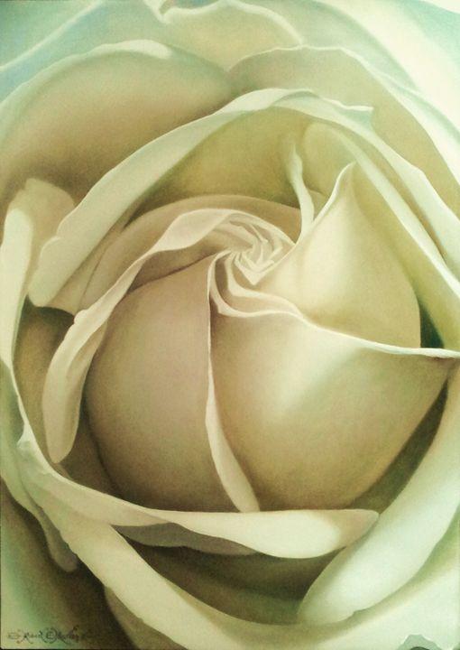 Rosa Blanca - Robert C. Murray II