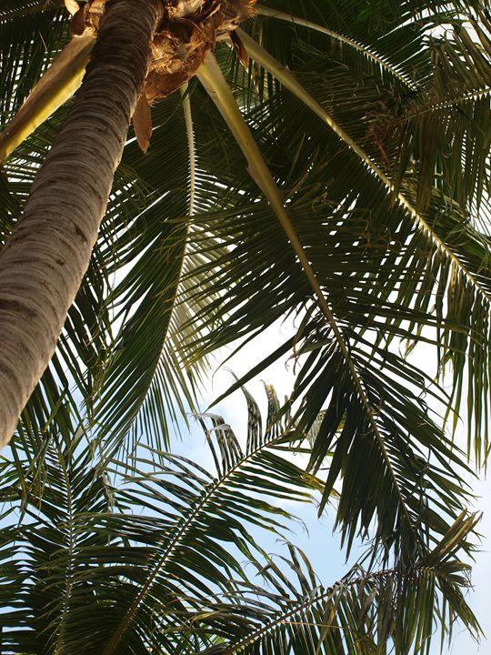 Palm Trees Above Photo - LJM Memories
