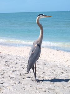 Large Bird on Beach