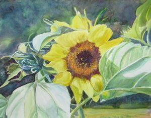 Sunniest Flower