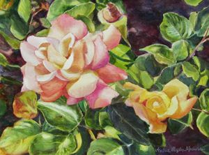 California Peace Rose