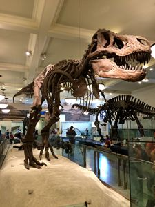 The giant T-Rex