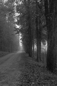 Back Road Trees