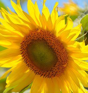 The Face of Golden Sun