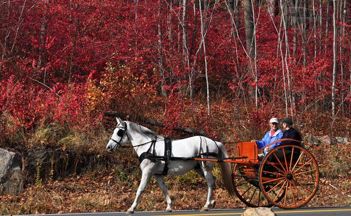Autumn Horse & Buggy Ride - NatureBabe Photos