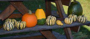 Colorful Gourds - NatureBabe Photos