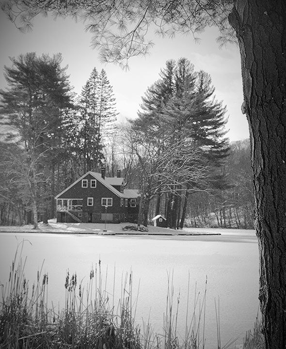 Winterscape - NatureBabe Photos