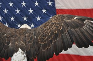 "Eagle ""Embracing"" the Flag"