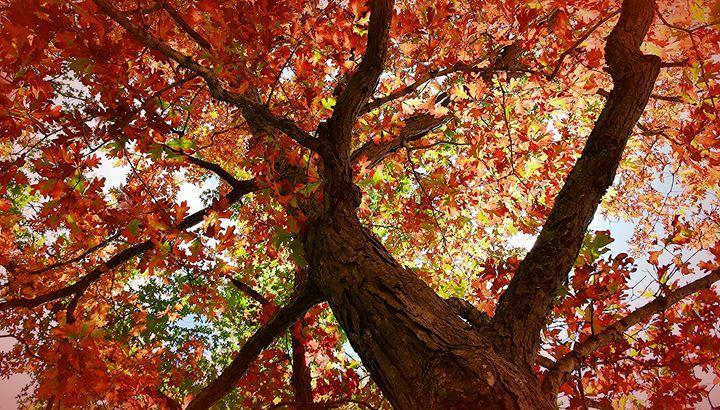 Inside the Oak - NatureBabe Photos