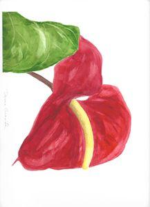 Flamingo Lily 1
