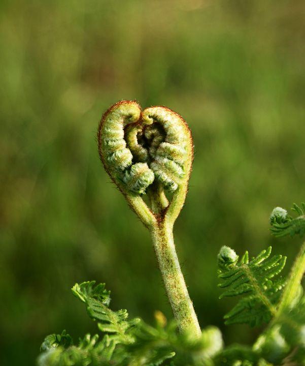 Flower 3 - Anetart Aneta Srodon