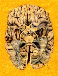 Brain section: visual neural pathway - T'lin Danaan