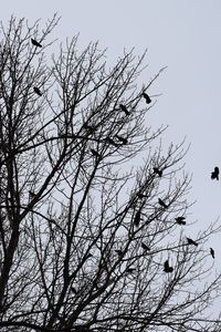 Birds on a tree - Ngtimages