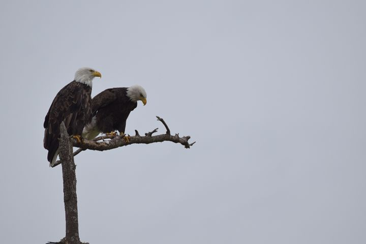 Eagles lookout - Ngtimages