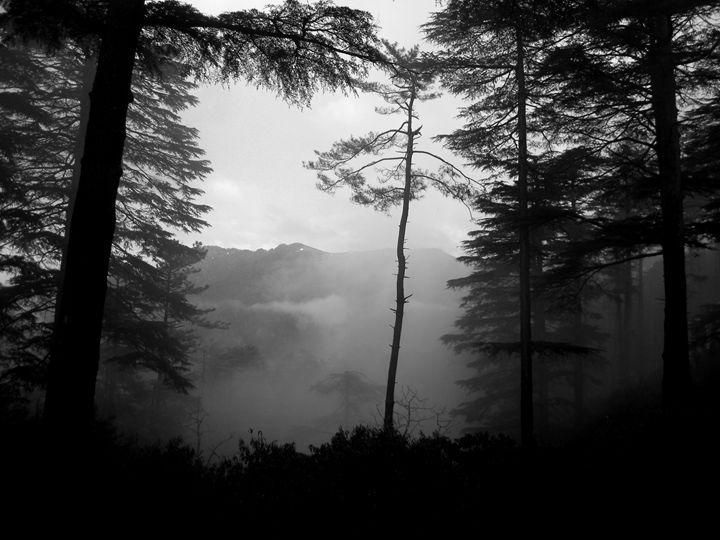 Landscape In The Mist - Tiyash Majumdar