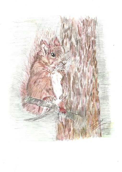 Little Red Squirel - Jacqueline Foulds