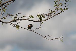 A bird in a tree.