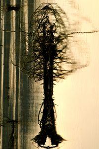 Driftwood as Tree