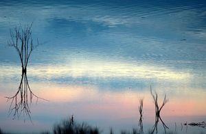 Wood, Water, Sky