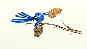 Ink Dancing Fairy Wren