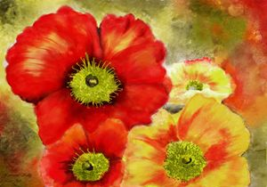 Morpheus's Abstract Red Poppies