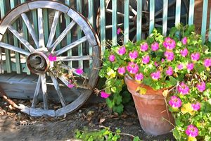 Potted Plant and a Wagon Wheel - FASGallery/ArtPal