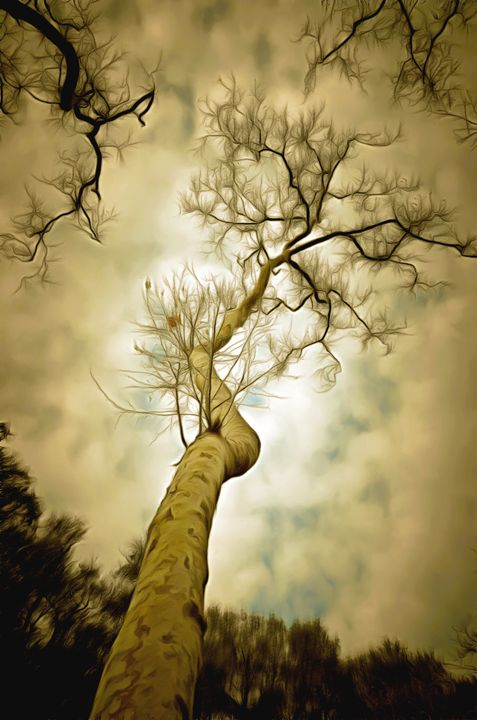 Tree Top In The Clouds - FASGallery/ArtPal