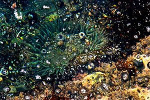 Mosaic tide pool