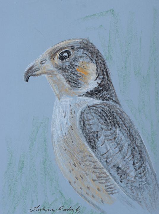 A Hawk - Juhan Rodrik