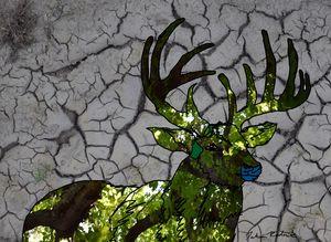 Dry Deer