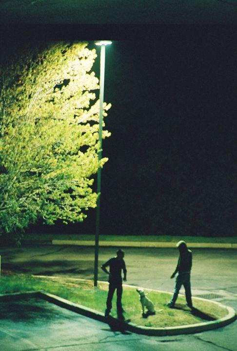 punks and pitbull 1 - instinct-photography