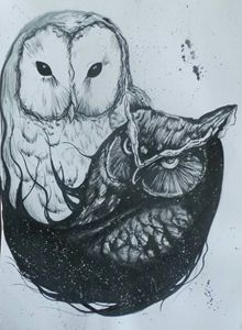black and white owls