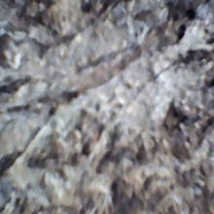 Bark XXVII - 480558 plus Photography