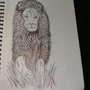 Emerging lion