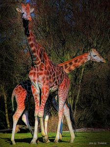 Impression Of A Pair Of Giraffes