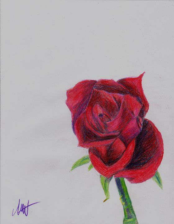 Colored Pencil Rose - Art by Indigo