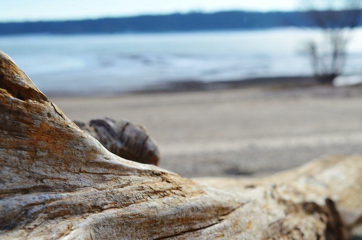Log on a Beach - Art by Indigo
