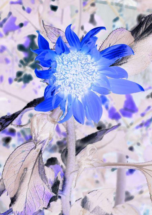 Pastel Sunflower - Double Moon Art