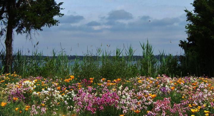 Wild Flowers in North Carolina - Ryan Lane Collection
