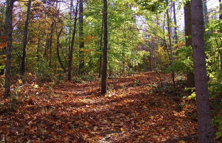Fall in Southern Illinois - Ryan Lane Collection