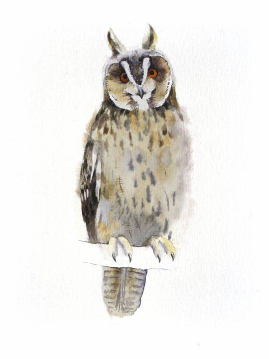 Owl - Attila Meszlenyi