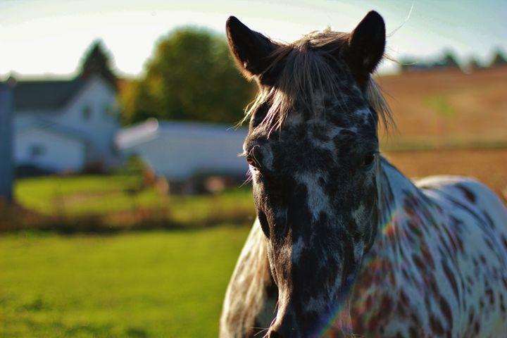 The Horse 17 - Ryan Earl