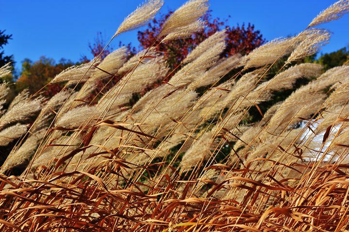 Prairie Grass Breeze - Ryan Earl