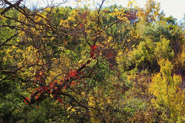Red Leaves - Ryan Earl