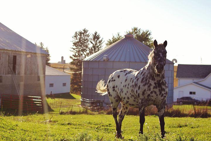 The Horse 15 - Ryan Earl