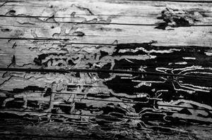 Termite Mazes