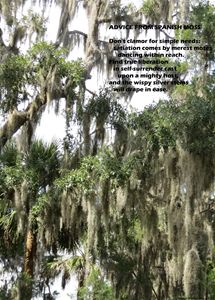 Advice From Spanish Moss
