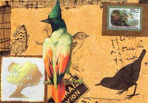 country birds