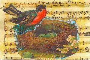robin in her nest art postcard
